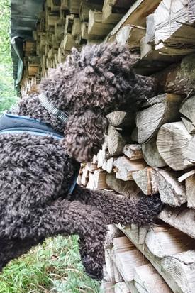 Hundeschule-Wolfspfote-59.jpg