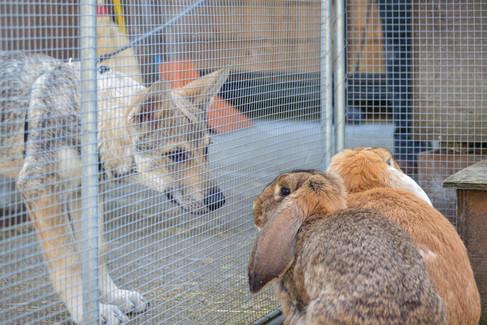 Hundeschule-Wolfspfote-25.jpg