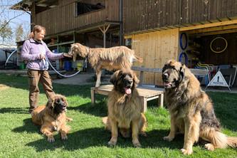 Hundeschule-Wolfspfote-43.jpg