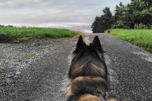 Hundeschule-Wolfspfote-61.jpg