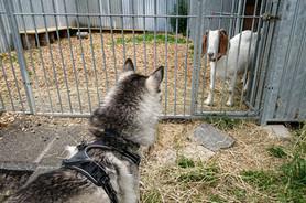 Hundeschule-Wolfspfote-46.jpg