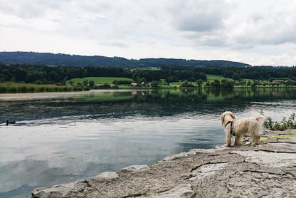Hundeschule-Wolfspfote-39.jpg
