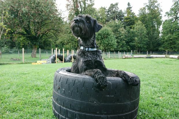 Hundeschule-Wolfspfote-58.jpg