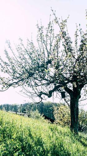 haueters-edle-destillate-v6-31.jpg
