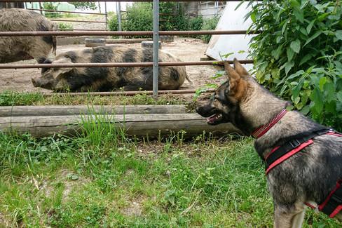 Hundeschule-Wolfspfote-44.jpg