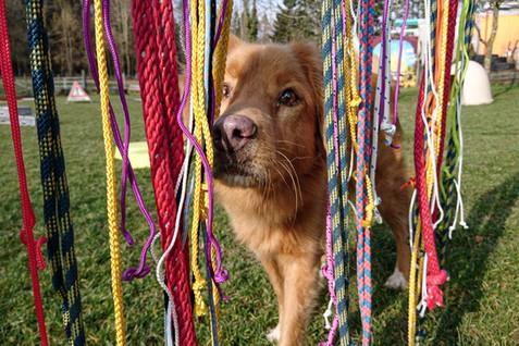 Hundeschule-Wolfspfote-34.jpg