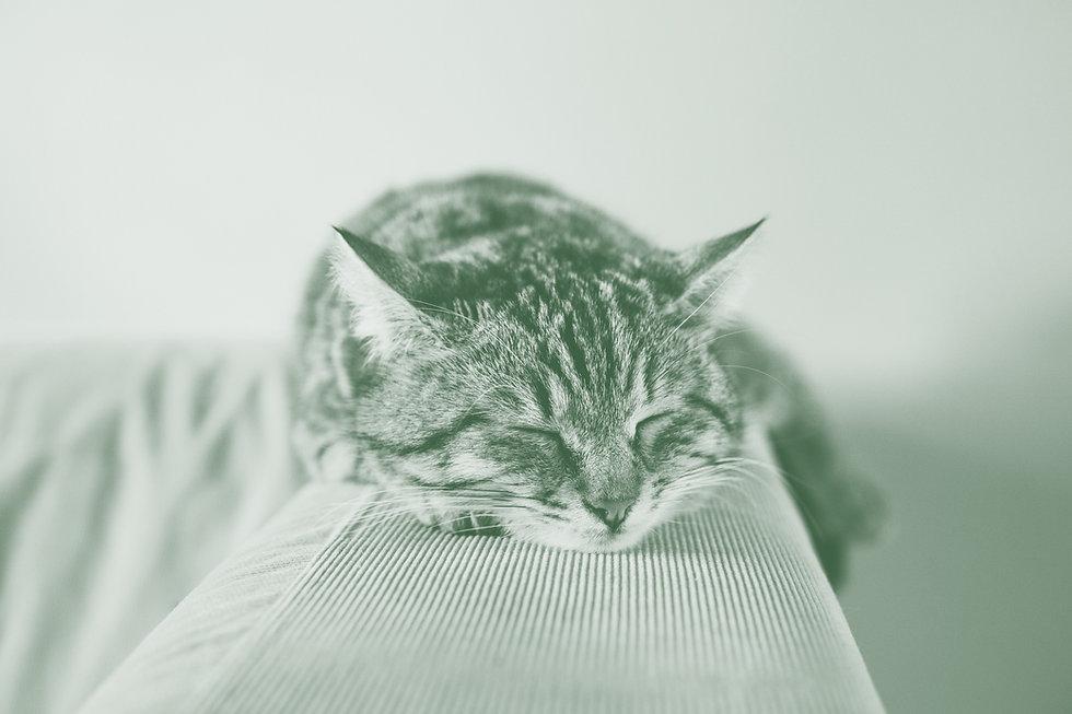 Sleeping%2520Kitten_edited_edited.jpg