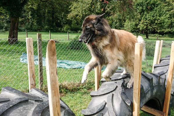 Hundeschule-Wolfspfote-53.jpg
