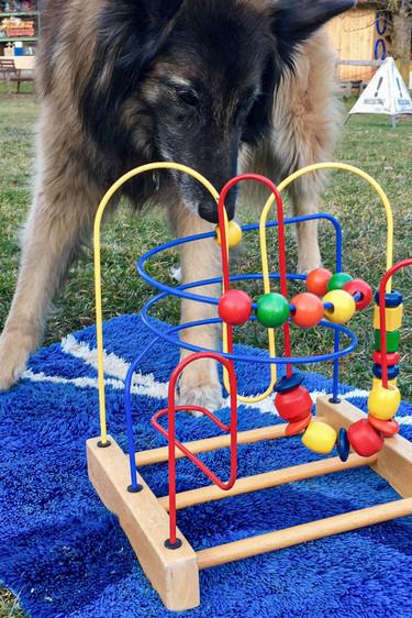 Hundeschule-Wolfspfote-41.jpg