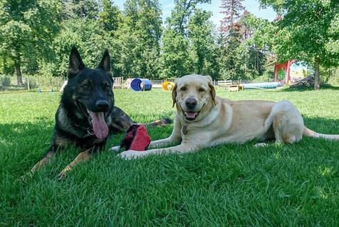 Hundeschule-Wolfspfote-47.jpg