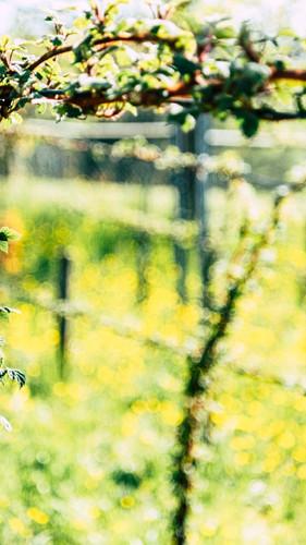 haueters-edle-destillate-v6-52.jpg