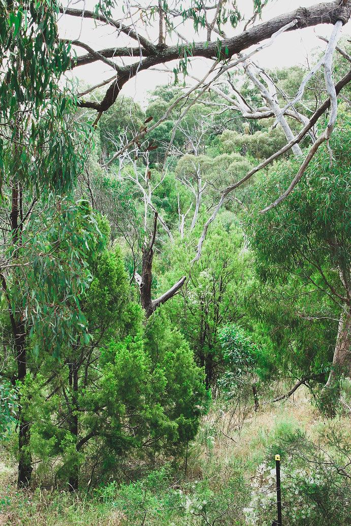 greenhills forest.jpg