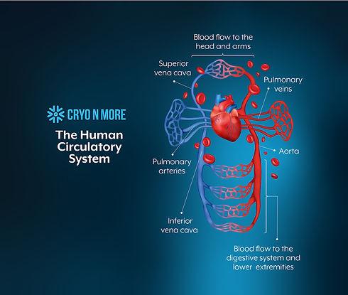 CryoNmore-Banner-CardioVascSystem-01.jpg