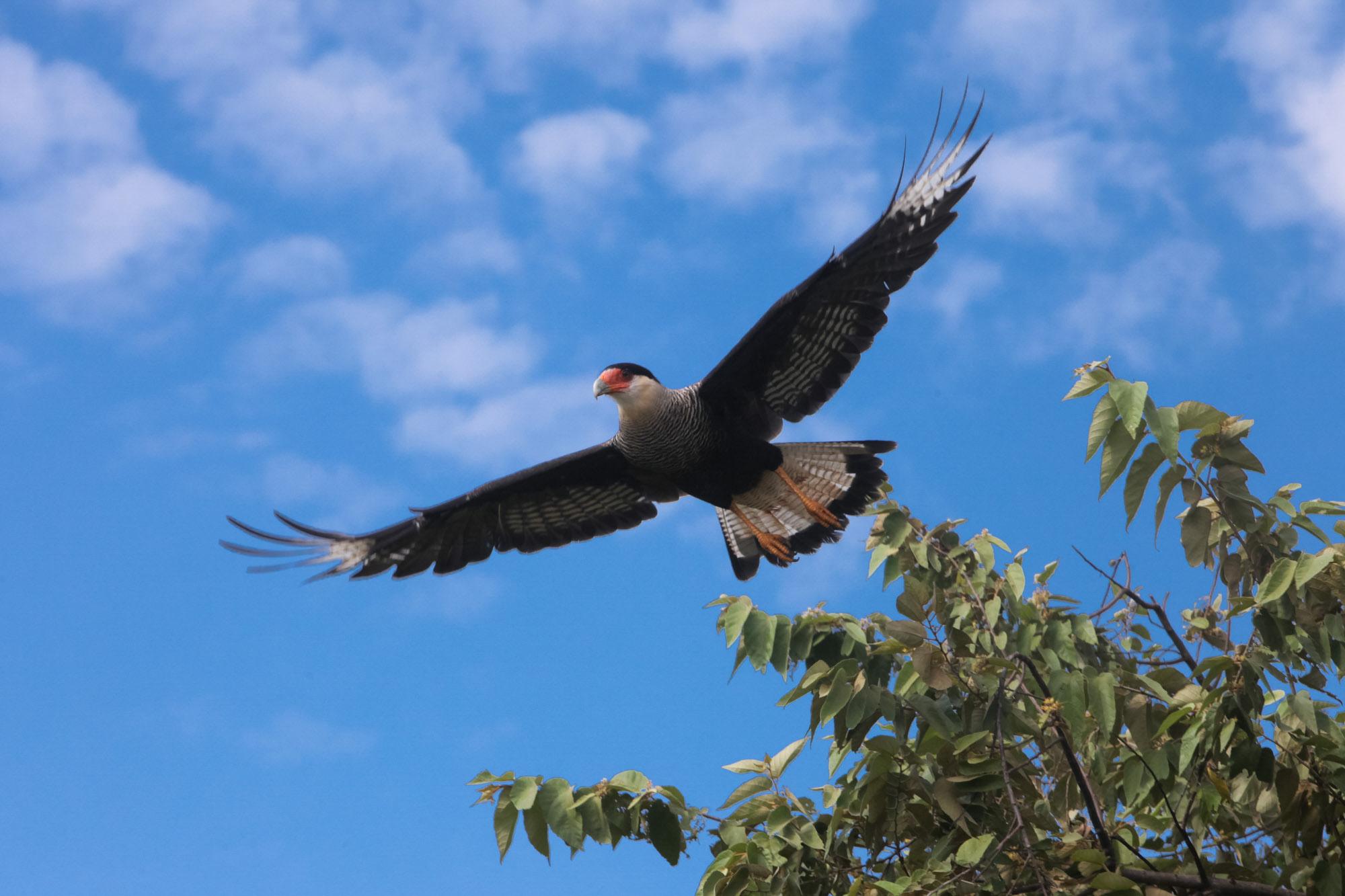 Pairando - Pantanal MS