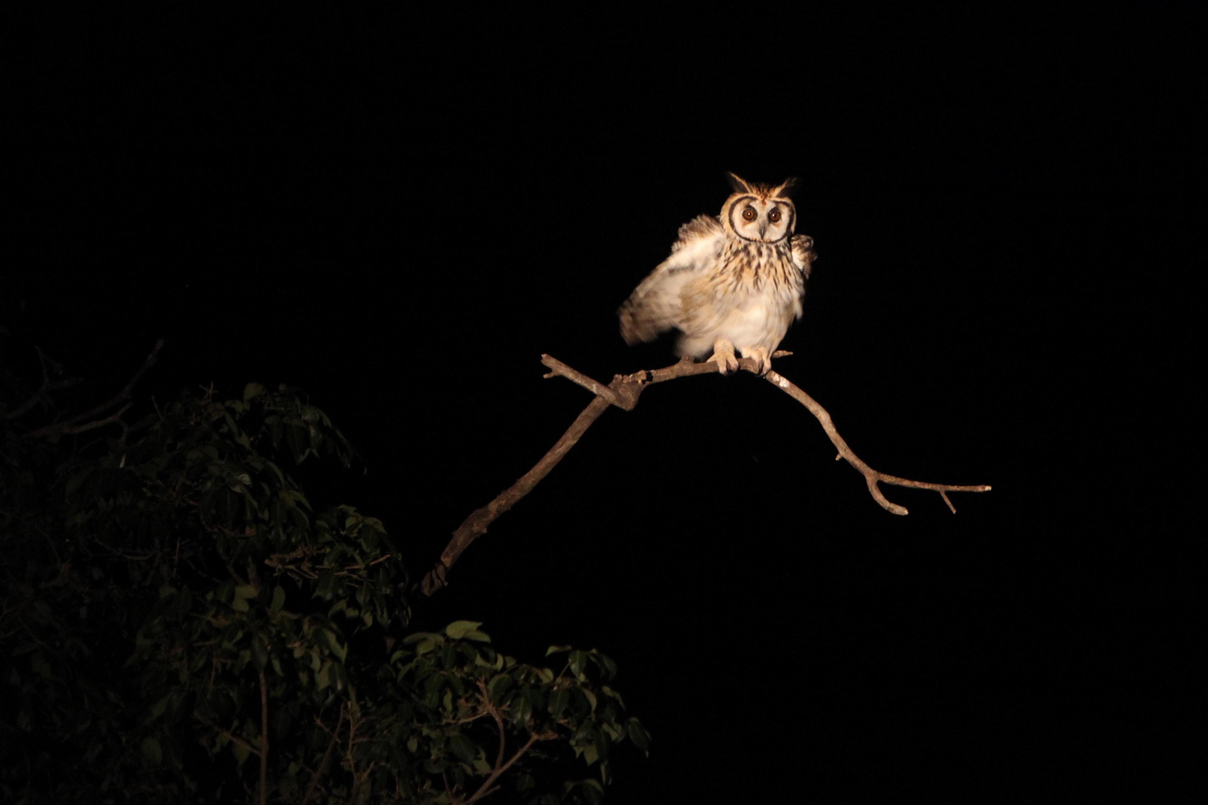 Silencio da Coruja - Pantanal MS2
