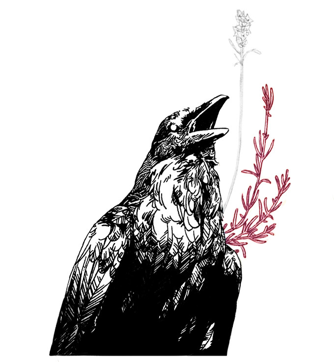 illustration Audrey Hess crow