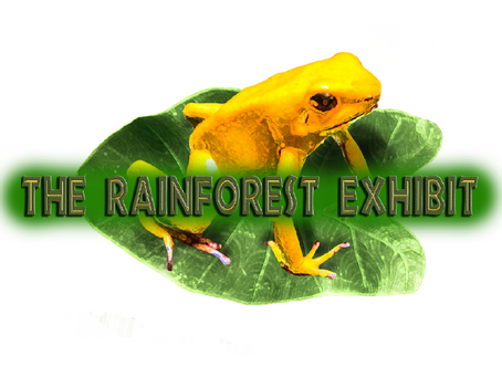 NEW PROJECT: The Rainforest Exhibit
