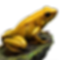 Huge_item_goldenpoisonfrog_01.png