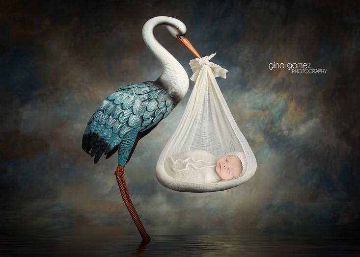 blue stork fb.jpg