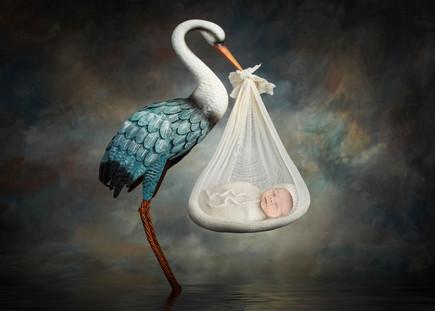 blue stork.jpg