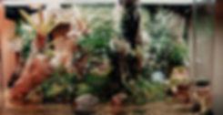 vivarium1.jpg