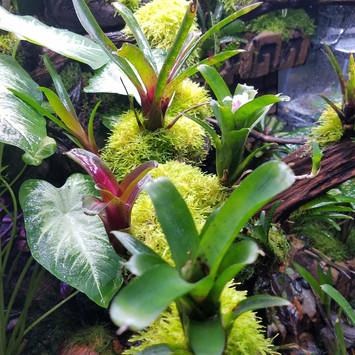 TRE Bromeliads