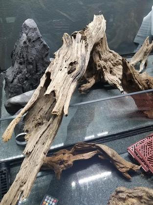 Driftwood Hollow Log