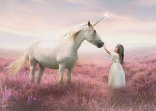 unicorn in pink fields.jpg