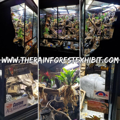 The Rainforest Exhibit...almost completed!