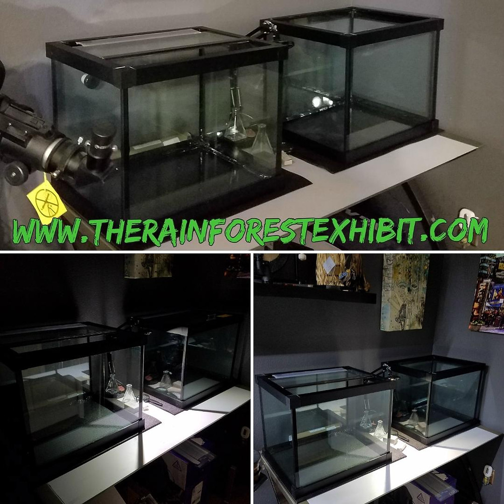 These are two of the 3 enclosures we received from Custom Aquariums that we are using to quarantine our livestock when they arrive.  These will house amphibians such as Phyllobates Terriblis or the Golden Poison Frog, Red-Eyed Tree Frogs, Mourning Geckos, etc.