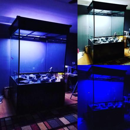 The Rainforest Exhibit lighting effect test!