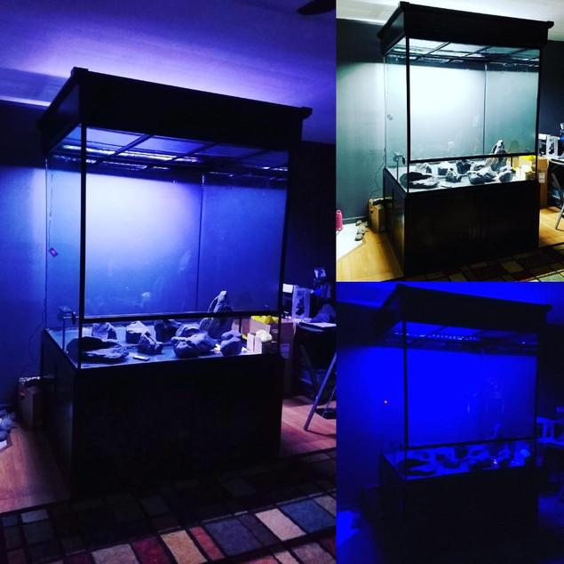 The Rainforest Exhibit Lighting Tests