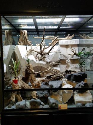 The Rainforest Exhibit being built