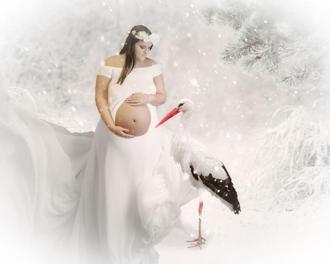 Winter Stork.jpg