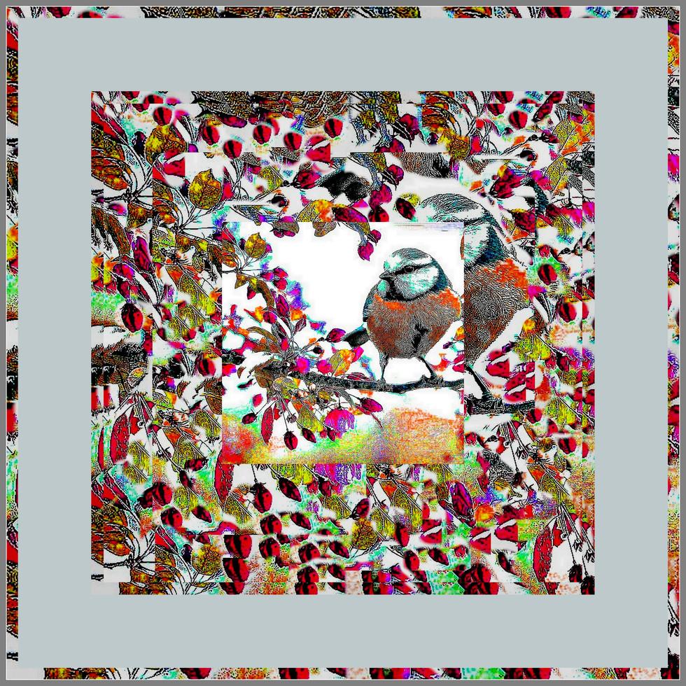 1-Collage586.jpg