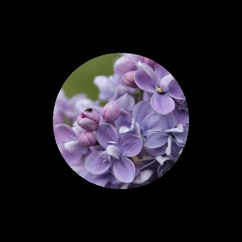 Blooming Growth Mindset Freebie