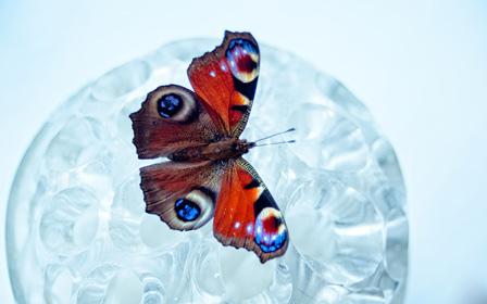 LDM Photo: Butterfly