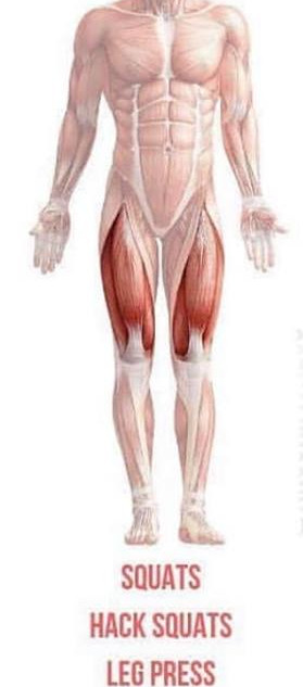 ISOLATED QUADS WORKOUT