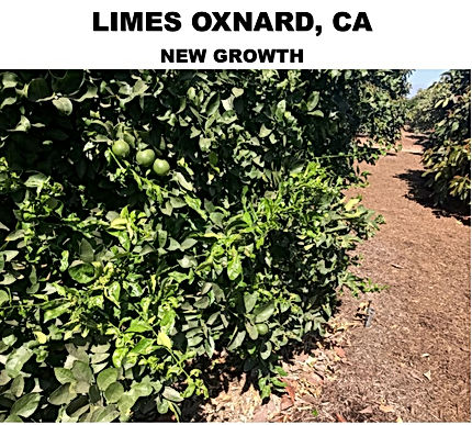 LIME OXNARD CA NEW GROWTH.jpg