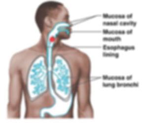 mucus3.jpg