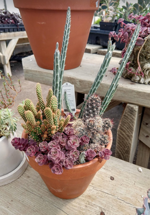 Tabletop Garden with Succulents