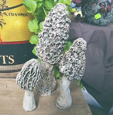 Concrete Morel Mushrooms