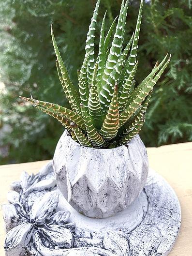 Handmade Concrete Planter Pot Zebra Succ