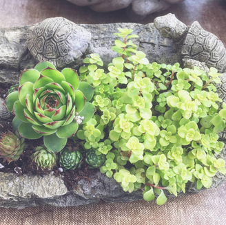 Turtle Pool Tabletop Garden