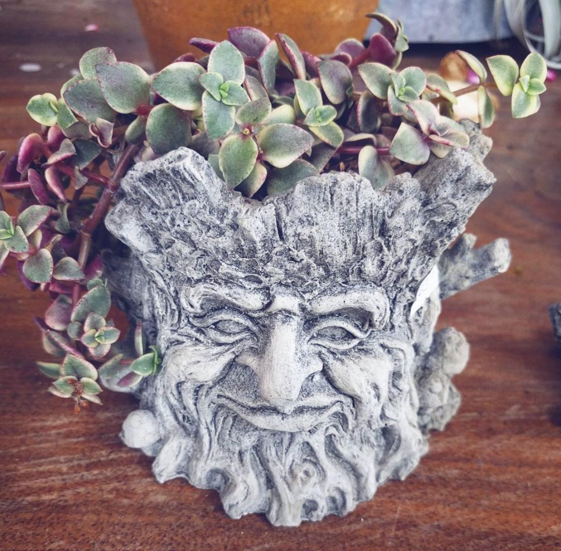 Stump Planter with Succulents