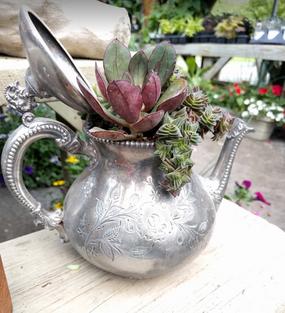 Tabletop Garden in Teapot