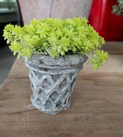 Concrete Succulent Planter