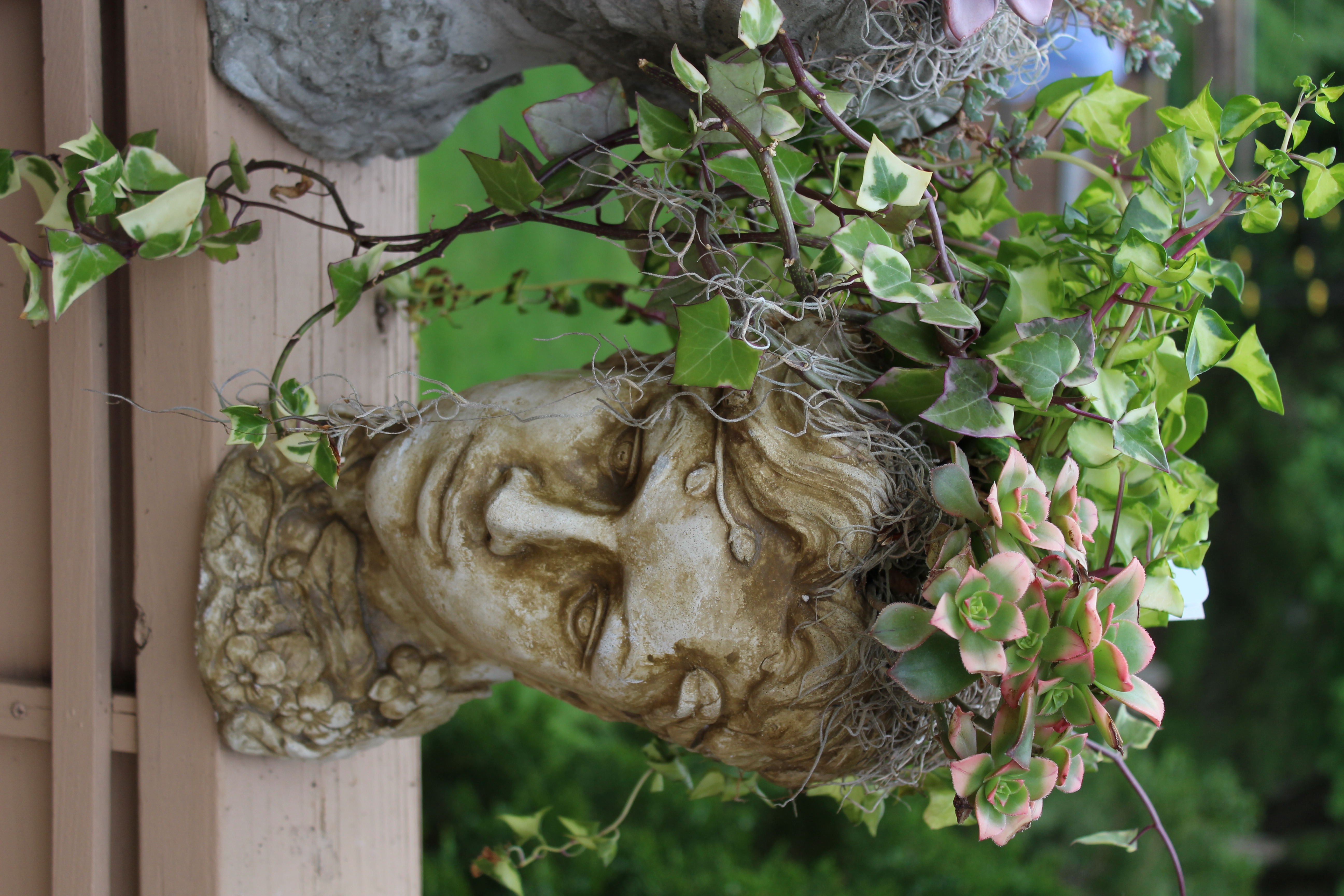 Concrete Head with Succulents