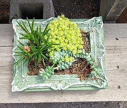 Tabletop Garden in Green Stain