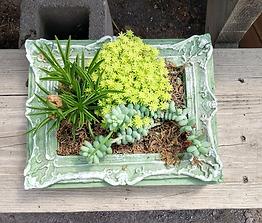 Tabletop Garden in Green Stain